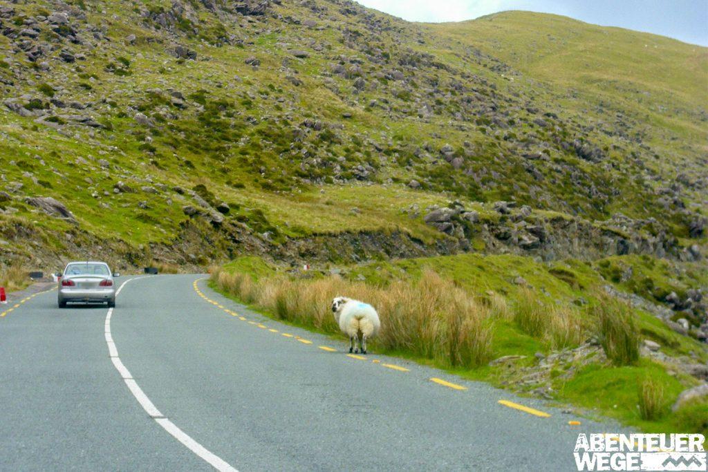 Autofahren in Irland – So einfach ist Drive & Hike