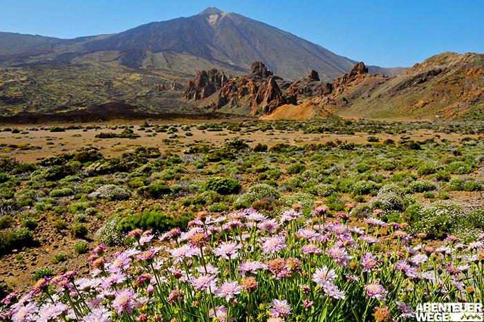 Blütenpracht im Teide Nationalpark auf Teneriffa