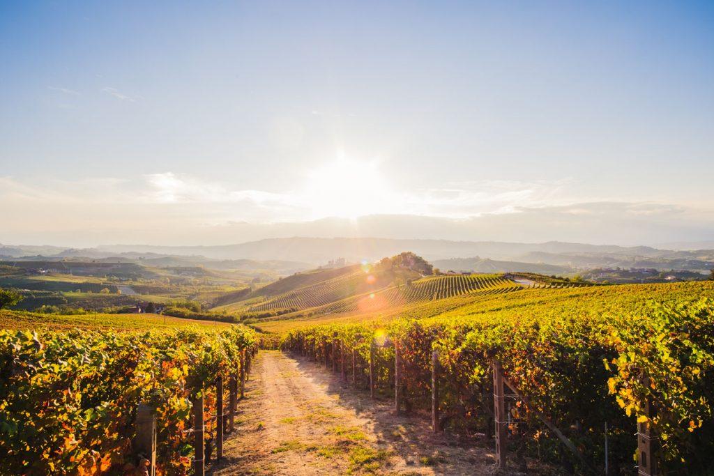 5 Wanderreisen für Weinliebhaber