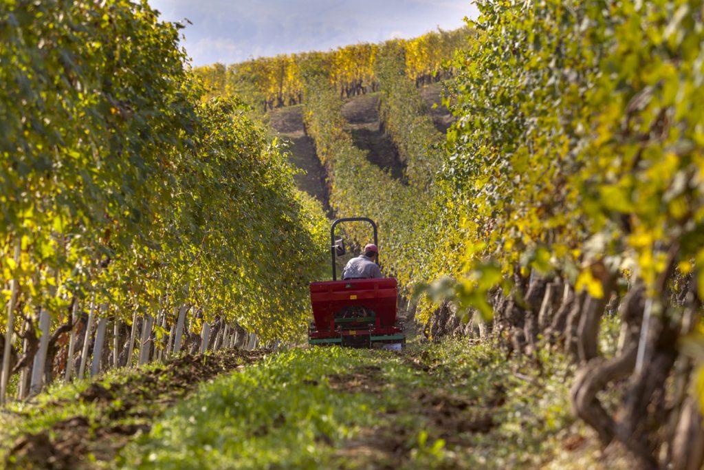 Entdecken Sie Winzer bei der Arbeit und kosten die den Wein der Region.