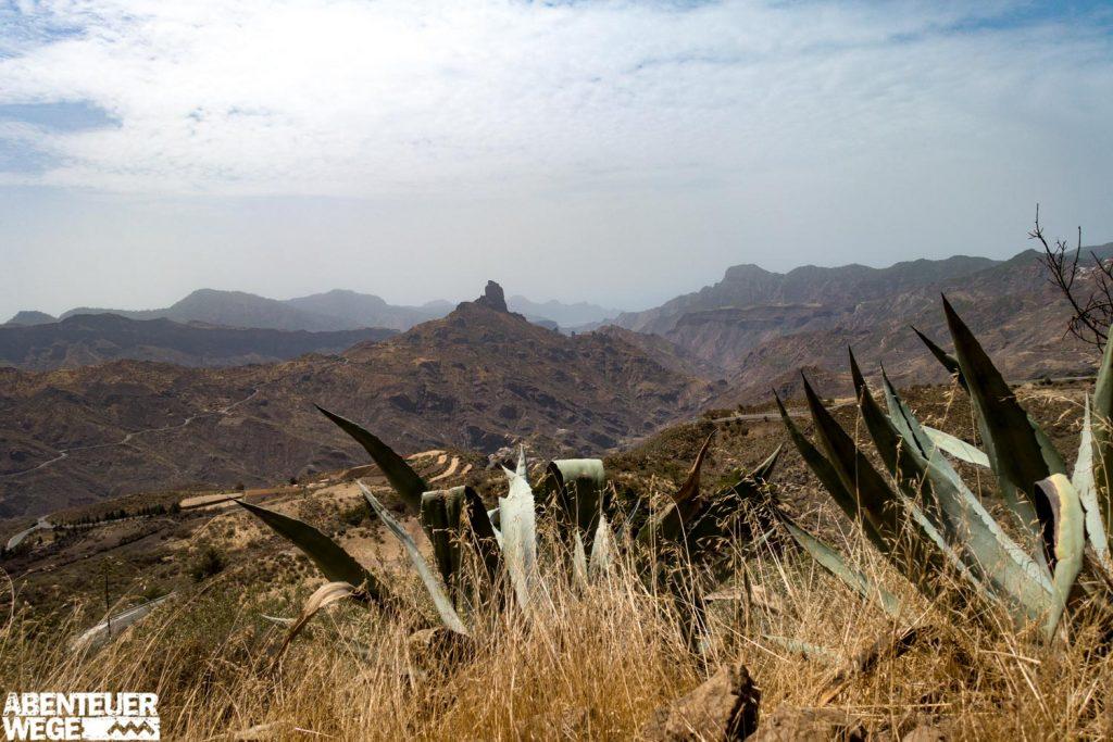 Wanderung-von-Agaete-nach-Tejeda_Kakteen_Pflanzen_Berge_Ausblick auf die Felsnadel El Roque Nublo.